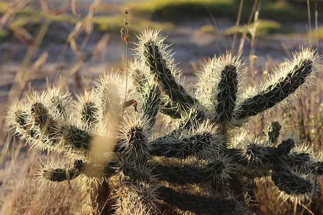 cactus-2976107_640.jpg